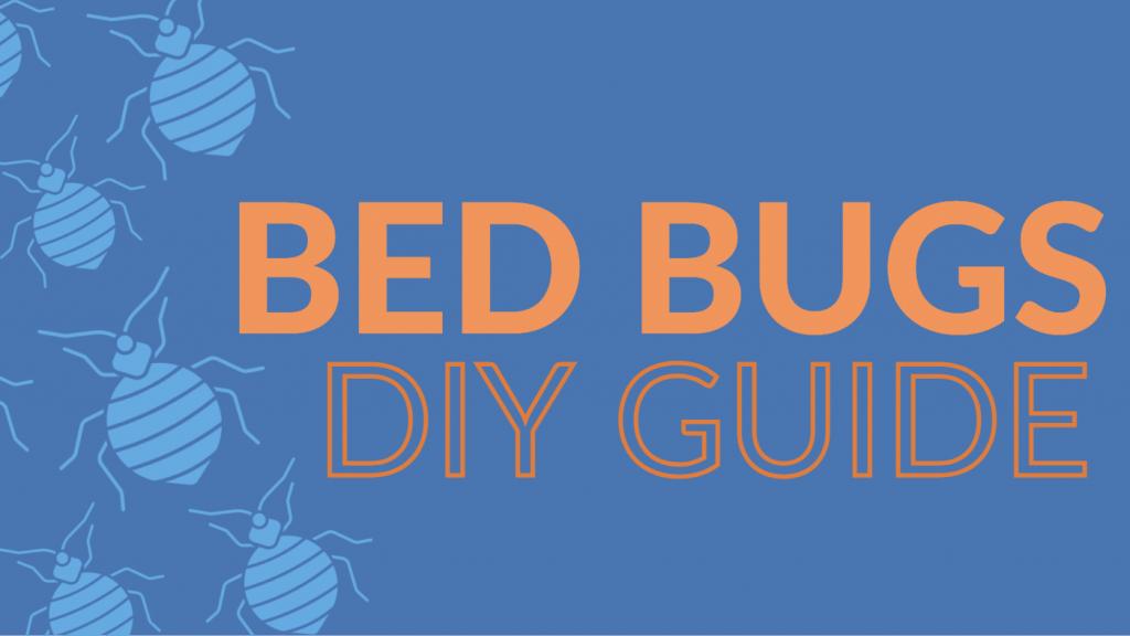 bed bug diy guide