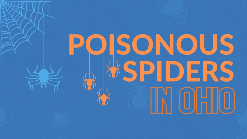 poisonous spiders in ohio